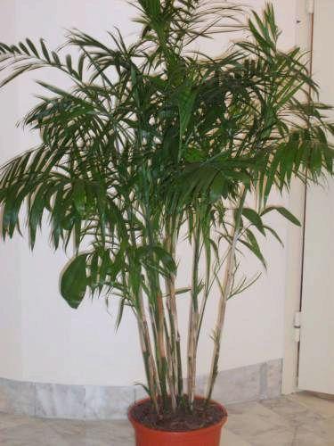 найти по фото название растения