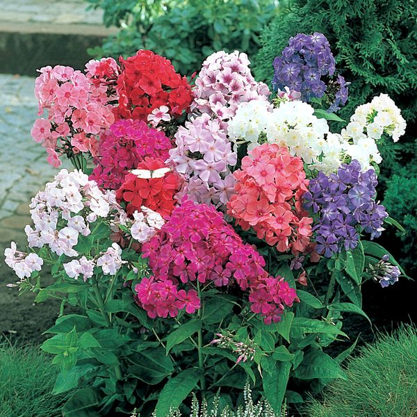Как посадить цветы по цветению